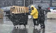 Bão tuyết hoành hành tại Mỹ, ít nhất 1 người tử vong