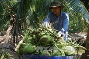 Công bố chỉ dẫn địa lý 'Bến Tre' cho dừa xiêm xanh và bưởi da xanh