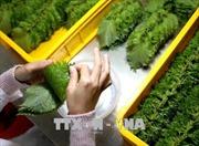 Xuất khẩu rau quả ước đạt 934 triệu USD