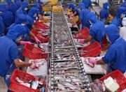 Xuất khẩu cá tra tiếp tục đối mặt với nhiều khó khăn