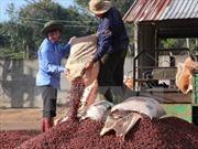 Nhiều mặt hàng nông sản xuất khẩu chủ lực bất ngờ giảm giá mạnh