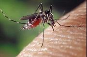 Một trường hợp tử vong do sốt xuất huyết ở Bình Phước