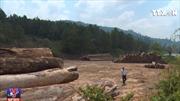 Kon Tum phát hiện vụ vận chuyển gỗ tang vật kèm gỗ lậu