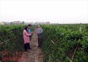 Xây dựng nông thôn mới tạo nên những vùng quê đáng sống