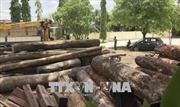Vụ vận chuyển gỗ lậu quy mô lớn: Đình chỉ công tác 4 cán bộ Bộ đội Biên phòng Đắk Lắk