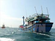 EC sẽ kiểm tra ngẫu nhiên các tỉnh về thẻ vàng của ngành thủy sản