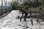 Yêu cầu kiểm điểm cá nhân, tập thể để xảy ra phá rừng lấy đất nuôi tôm tại Cà Mau