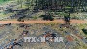 Vụ 'Tan hoang rừng thông ven Quốc lộ 28': Kiến nghị UBND tỉnh Đắk Nông thu hồi dự án, xử lý nghiêm các sai phạm