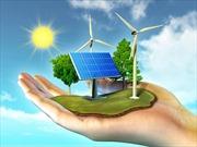 Yêu cầu báo cáo về giá thành năng lượng tái tạo có tới 30% ở quy trình thủ tục