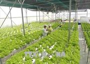 Ứng dụng công nghệ mới phát triển chuỗi giá trị nông sản Việt Nam – Nhật Bản