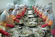 Gỡ khó cho doanh nghiệp xuất khẩu tôm vào thị trường Hoa Kỳ