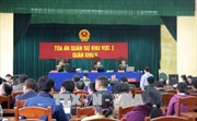 Xét xử vụ phá rừng pơ mu tại Quảng Nam