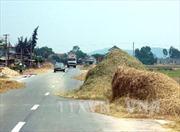 Vĩnh Phúc: Phơi rơm trên đường gây mất an toàn giao thông