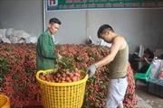 Trên 87.000 tấn vải thiều đã được xuất khẩu