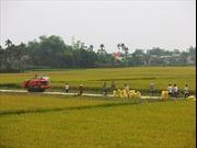 Xây dựng nông thôn mới ở Quảng Nam: Bài 3-Tạo những bước đi vững chắc