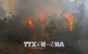 Nghệ An: Rừng thông bùng cháy, hàng trăm người khẩn trương dập lửa giữa nắng nóng