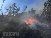 Nắng nóng trên 40 độ C, tăng cường cán bộ kiểm lâm tới trọng điểm về cháy rừng