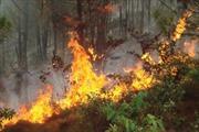 12 tỉnh, thành phố đang có nguy cơ cháy rừng cao