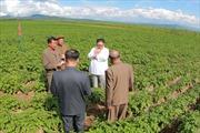 Đằng sau chuyến thăm nông trang gần biên giới Trung Quốc của nhà lãnh đạo Triều Tiên