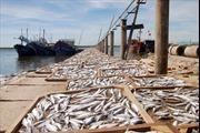 Truy xuất nguồn gốc là mấu chốt để gỡ 'thẻ vàng' thủy sản