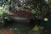 Chương Mỹ: 1/3 số hộ dân xã Tân Tiến bị ngập, gần 350 ha lúa, thủy sản bị ảnh hưởng