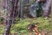 Hết hồn mặt đất rừng Canada 'thở' phập phồng y hệt phim kinh dị