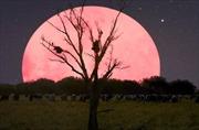 'Siêu Trăng hồng' thắp sáng thế giới giữa đại dịch COVID-19
