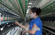 CPTPP và EVFTA tạo sức hút đầu tư vào dệt may Việt Nam