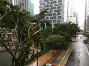 Siêu bão Mangkhut gây thiệt hại nghiêm trọng tại Hong Kong và Macau