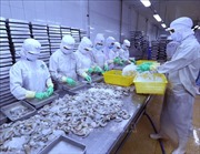 Vượt áp lực thẻ vàng IUU, xuất khẩu thủy sản dự kiến đạt mức 9 tỷ USD