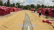 Giá lúa gạo có xu hướng tăng