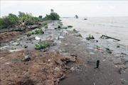 Sạt lở nghiêm trọng ở Đồng bằng sông Cửu Long - Bài 2: Cần thực hiện đồng bộ nhiều giải pháp