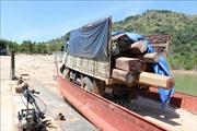 Kon Tum: Điều tra làm rõ vụ vận chuyển gỗ lậu trên sông Sê San