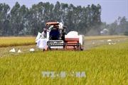 Ứng dụng năng lượng nguyên tử phục vụ phát triển kinh tế - xã hội * Bài cuối: Thúc đẩy phát triển nông nghiệp bền vững