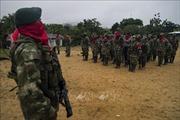 Nhóm vũ trang tại Colombiatuyên bố ngừng bắn đơn phương