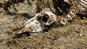 Argentina phát hiện hóa thạch khủng long chân chim mới
