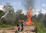 Khống chế nhanh hai điểm cháy ở Vườn Quốc gia Hoàng Liên