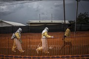 Liên hợp quốc cam kết huy động mọi nguồn lực dập tắt dịch Ebola