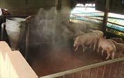 Sóc Trăng: Kiểm soát chặt các chốt kiểm dịch động vật