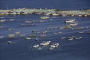 Israel lại thu hẹp vùng cho phép đánh bắt cá ngoài khơi Dải Gaza