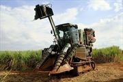 Brazil hủy lệnh cấm trồng mía ở rừng nhiệt đới Amazon
