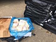 Tiêu hủy 270 kg thịt gà đông lạnh không rõ nguồn gốc