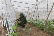 Mô hình nông nghiệp ứng dụng công nghệ cao tại Trung đoàn Minh Đạm