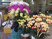TP Hồ Chí Minh hướng đến phát triển bền vững cây hoa lan