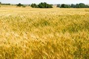 Dịch COVID-19: Nhiều nước dừng xuất khẩu lương thực, đe dọa nguồn cung toàn cầu