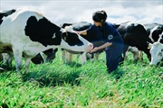 Vinamilk  có hệ thống trang trại đạt chuẩn Global GAP lớn nhất châu Á