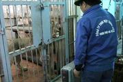 Vườn thú Hà Nội đốt lửa, lắp máy sưởi chống rét cho thú quý
