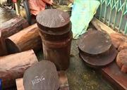 Bắt 3 đối tượng phá rừng nghiến ở Bắc Kạn
