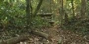 Khởi tố, bắt tạm giam nguyên Trạm trưởng Kiểm lâm trong vụ phá rừng ở Vườn quốc gia Phong Nha- Kẻ Bàng