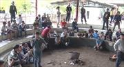 Phú Yên khởi tố vụ đánh bạc bằng hình thức đá gà